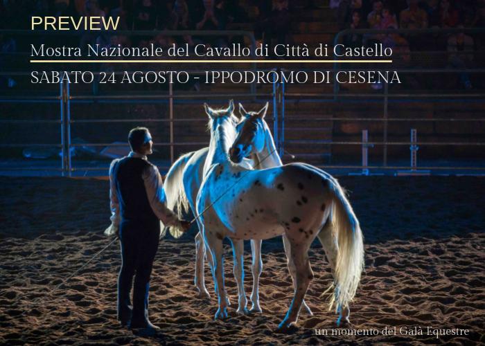 Sabato 24 agosto all'ippodromo di Cesena l'anteprima della Mostra Nazionale del Cavallo