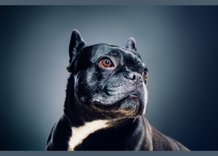 Esposizione Canina e Raduni di Razza, il 24-25 luglio all'ippodromo